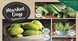 spinneys supermarket offers